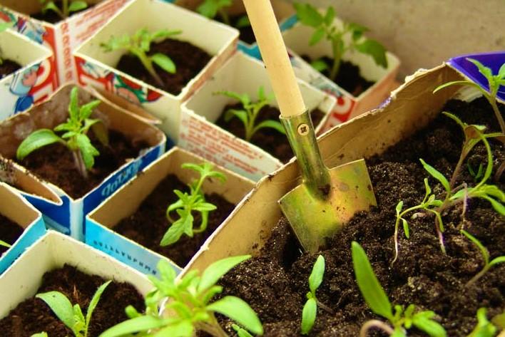 Грунт для растений, купить универсальный грунт. Интернет магазин Экогель