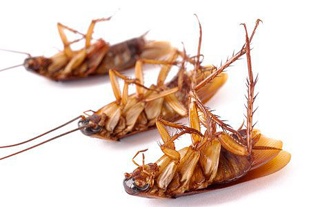 Избавиться от тараканов, Бокс-приманка Delicia от тараканов
