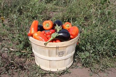 Купить удобрения для огорода: помидоров, огурцов, картофеля