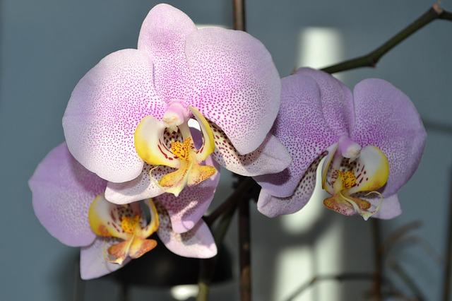 Удобрение для орхидей - купить