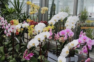 Удобрение для орхидей. Удобрения и стимуляторы роста для растений.