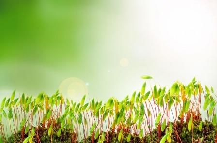 Экогель, Экогель для растений, стимуляторы роста растений, купить Экогель
