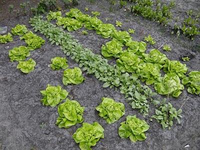 Удобрения для огорода купить