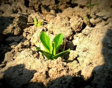 Купить удобрения, удобрения оптом, удобрения для комнатных растений